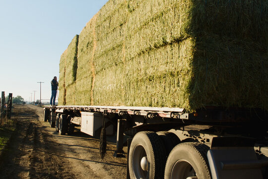 driver stands on end of flatbed loaded with hay