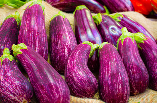 Fresh eggplants harvested from the garden