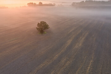 Aerial view of a single tree in a field. Agricultural landscape covered in the fog, illuminated by the rising sun. Colorful autumn fog, over the countryside.