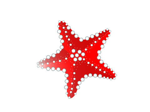 red starfish isolated on white