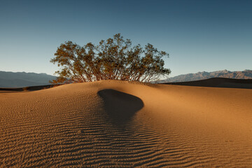 Dunes in the Evening Light
