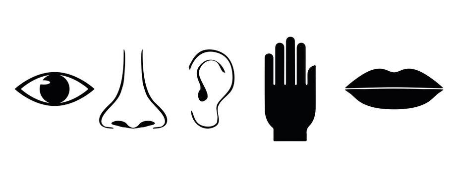 Five human senses symbols