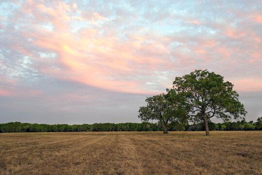 Schreiner Summer Sunset