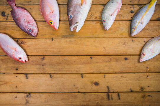 Top view of Caribbean Fresh fishes seafood on a rustic wooden table. The composition includes fish Yellow tail Snapper and Groupers