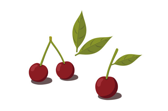 cherries with leaves isolated on white background vector illustration