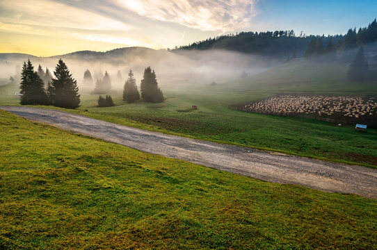 morning mist in apuseni natural park. valley full of fog at dawn. beautiful landscape of romania mountains in autumn. flock of sheep on the meadow. spruce trees on the hills. glowing clouds on the sky