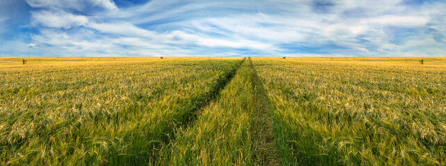 Fototapete - Scenic view of grain field and bright blue sky with Cirrus. Rural summer landscape. Beauty nature, agriculture and seasonal harvest time. Panoramic banner.