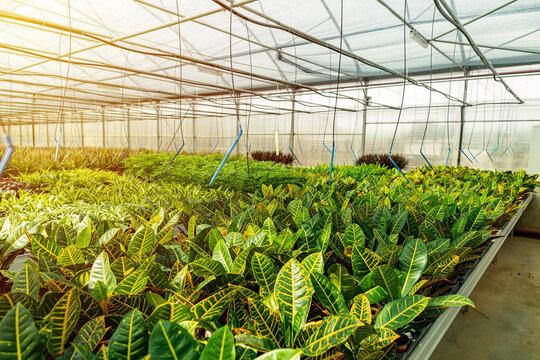 Modern large greenhouse