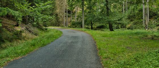 Photo sur Aluminium Vert Szlak turystyczny w lesie