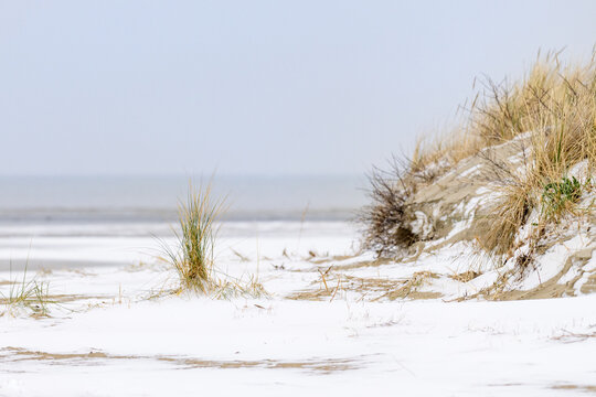 Winter landscape with snow on the beach in the Netherlands. Dunes with marram grass are visible through the snow.