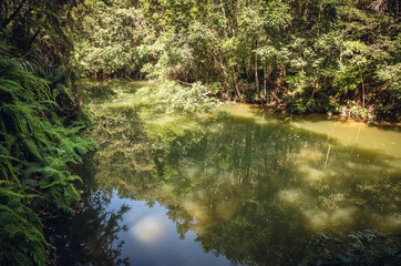 landscape of tropical forest with a pond