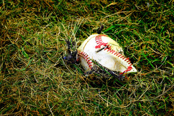 Ruined Torn Baseball Broken Ball in the Grass