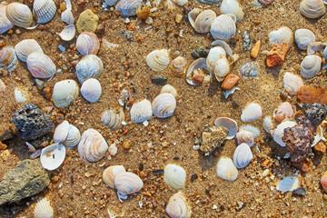 shells on the beach sand