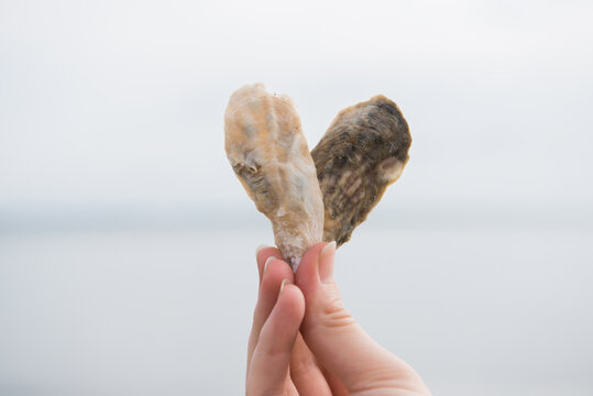 Hands holding oyster shells in the shape of a heart