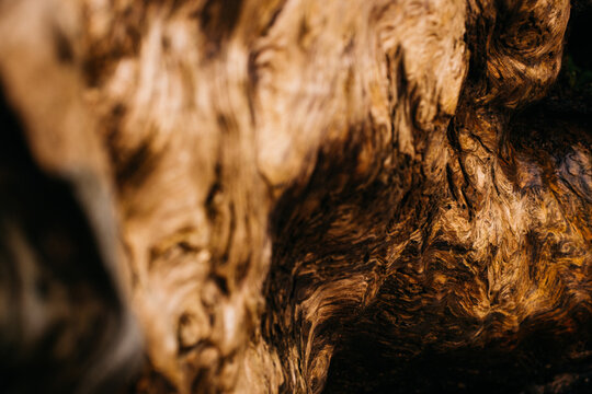 close up shot of tree wood grain texture on drift wood