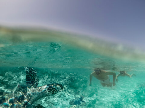 Father and son swimming with a turtle in the ocean