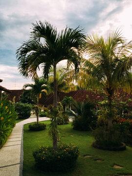 A tropical garden
