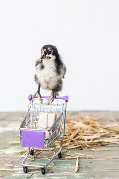 chick with trolley with 1 item