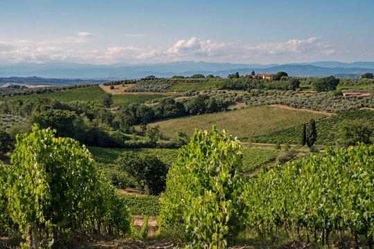 Vineyards at the Tuscany Region in Italy near Gambassi Terme