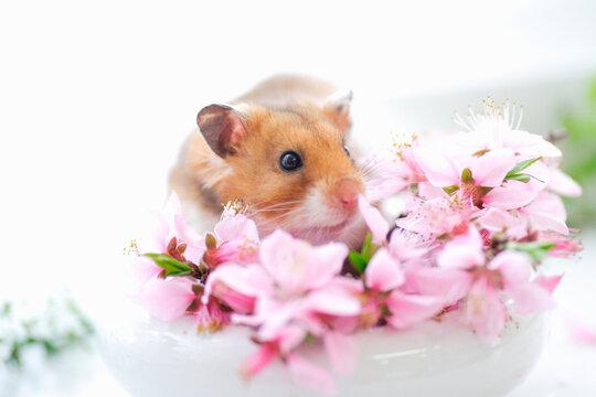ハムスターと花