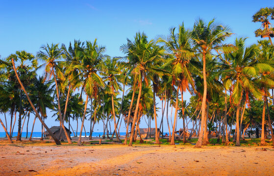 Talaimannar village, Mannar island, Sri Lanka, South Asia. Beautiful scenic view - fishing huts, Indian Ocean, sand, coconut palm trees in the light of the setting sun at the background of blue sky