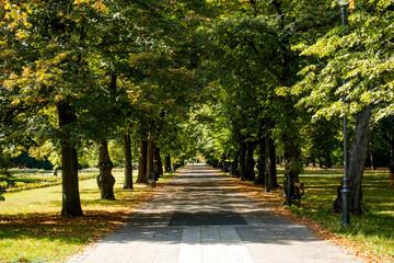 Łódź miasto park aleja ścieżka drzewa jesień
