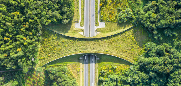 Aerial top down view of ecoduct or wildlife crossing - vegetation covered bridge over a motorway that allows wildlife to safely cross over