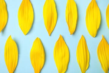 Fresh yellow sunflower petals on light blue background, flat lay
