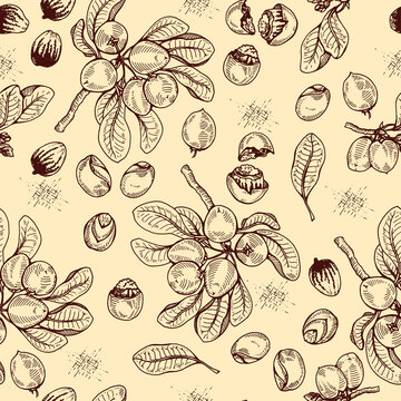 Seamless Pattern with branch Shea tree with fruits, nuts, leaves and Shea butter. Detailed hand-drawn sketches, vector botanical illustration. For cosmetics, medicine, aromatherapy.