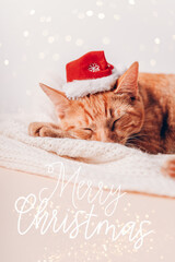 Merry Christmas text. Cute little ginger kitten sleeps on the sofa with xmas hat on, Christmas or New Year postcard