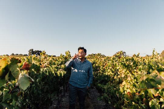 Wine Maker Tastes Wine in Field