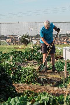 Senior Gardener digging bed at community garden
