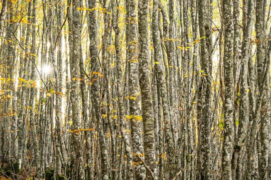 Tree trunks and sunshine