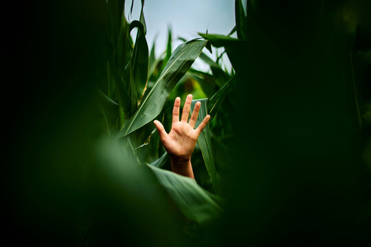Hand in the middle of dense vegetation