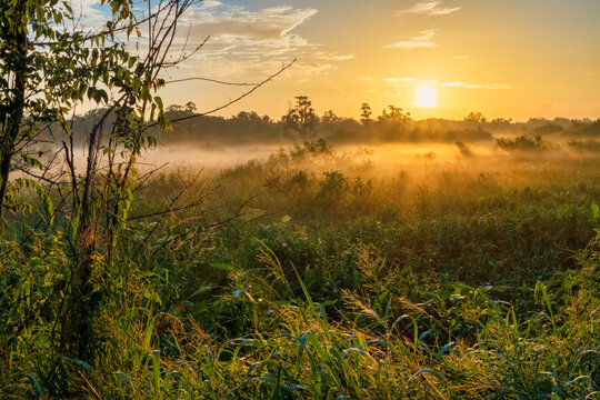Sunrise landscape at Circle-B-Bar Reserve near Lakeland, Florida.