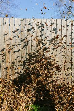 Leaf Blowin'