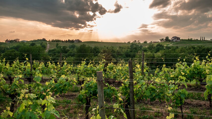 Spring stormy sunset in the vineyards of Collio Friulano, Friuli-Venezia Giulia, Italy