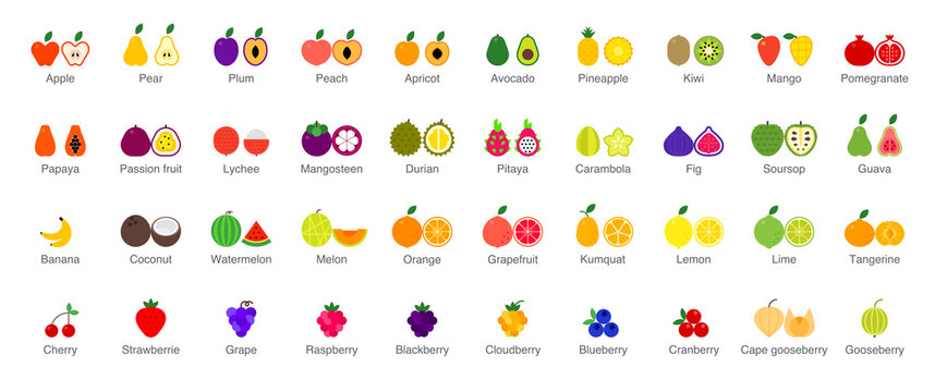 Vector set of colorful Fruits and Berries icons. Isolated illustrations on white background
