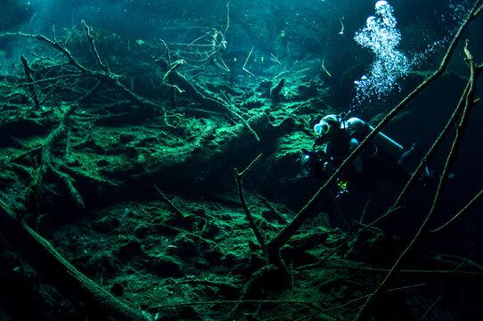 Sunken Mayan Forest