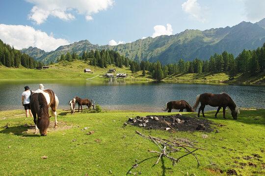 Pferde auf der Weide vor dem Duisitzkarsee bei Schladming