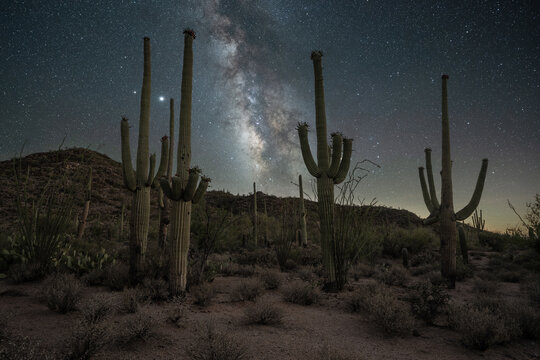 Milky Way Galaxy in the desert with Saguaro cactus in Arizona