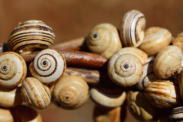 Many small snails with brown and light-colored snail shells hang on the handle of a wicker basket against a brown background