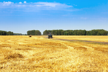 Harvesting in autumn, wheat fields, tractor driving on field road. Harvest time. Rural scenery with blue sky.