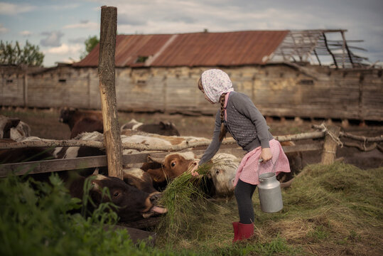 Picture of a girl on a farm in the country. Feeds a cow with hay.