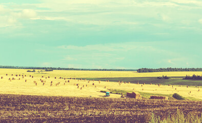 Sunny rural landscape with golden haystacks in farm field during harvesting time.