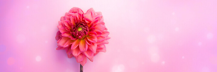 Photo sur Plexiglas Dahlia beautiful flower dahlia summer autumn background banner with bokeh - greeting card designd for wedding, mothers day and birthday