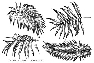 Vector set of hand drawn black and white tropical palm leaves Wall mural