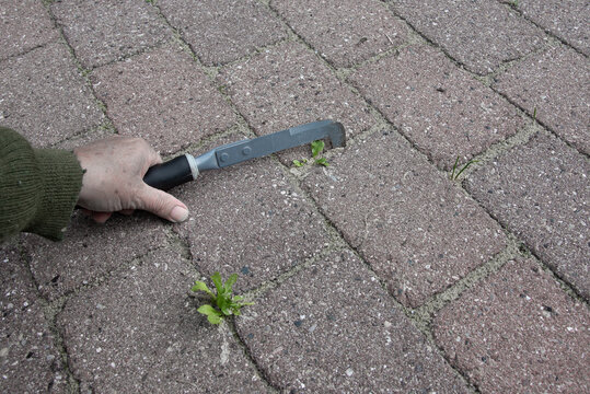 clear weeds between tiles with an iron