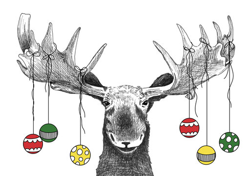 Funny Christmas moose with Christmas ornaments hanging from antlers, holiday party animal drawing for invitations or card, hand drawn sketch of moose