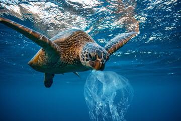 Photo sur Plexiglas Tortue Water Environmental Pollution Problem Underwater animal Sea turtle eating Plastic